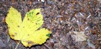 есенно-листо